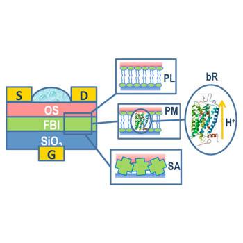 Sensore a transistor organico ad effetto di campo