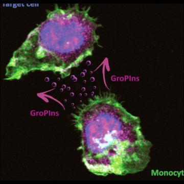 Il glicerofosfoinositolo come antisettico