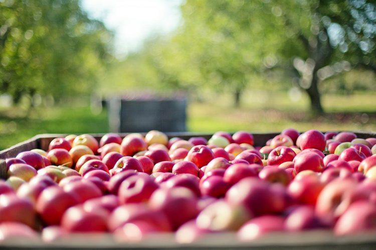 Coltivazione frutta