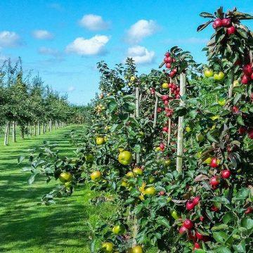 Sistema coltivazione automatica frutteto