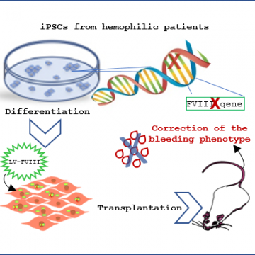 iPSC for cellular and genetic therapy