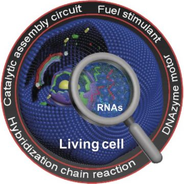 Single cell tagging and analysis using RNA method